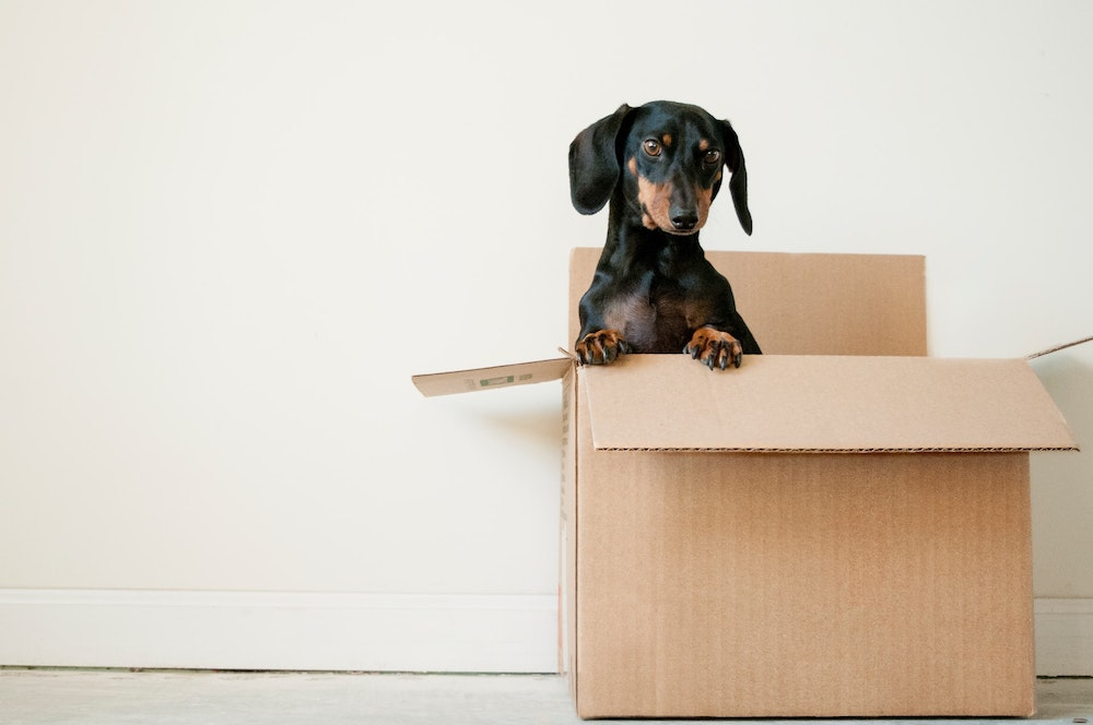 Dog in a packing removalist back